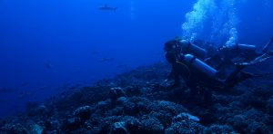 Scuba Diving with Sharks in Fakarva