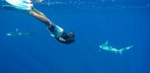 reo-stevens-shark