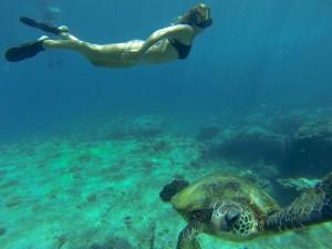 turtle-dive