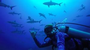 sharks-fakarava-tuamotu-french-polynesia