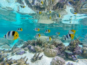 reef-fish-tuamotu-french-polynesia