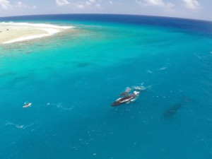humback-whales-reefpass-tuamotu-french-polynesia